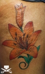 Plummer lily